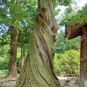 【アーカイブス】善通寺にまつわる「龍神」の威力
