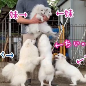 【動画・犬の里帰り】栃木のブリーダーさんのところに行って親犬に会ってきました。