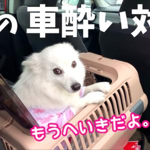 【犬の車酔い対策】ちぃ。はこれで車に酔わなくなりました🐶