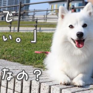 愛犬の名前が「ちぃ。」になったワケ – 犬の名前の由来