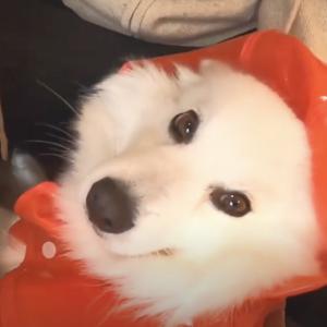 梅雨の時期の愛犬散歩は、行く?行かない?