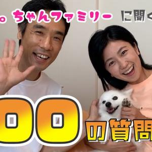 日本スピッツちぃ。に聞く『100の質問』