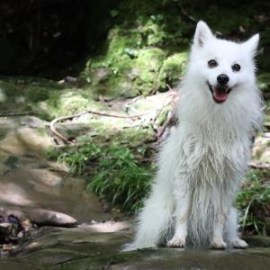 養老渓谷「粟又の滝」で初めての川遊び。愛犬がめちゃめちゃ笑顔で楽しそうでした(笑)