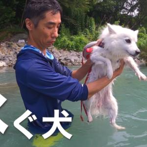 奥多摩「釜の淵公園」で犬連れで川遊び【動画あり】