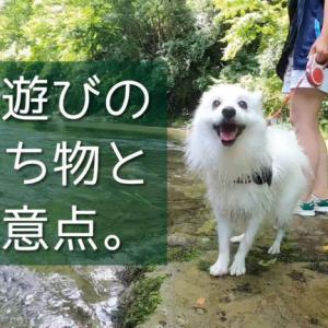 愛犬と川遊びをするときの持ち物と注意点!