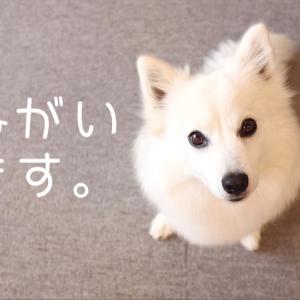 日本スピッツ協会本部展に見学にいらっしゃる方に、ご注意とお願いです。