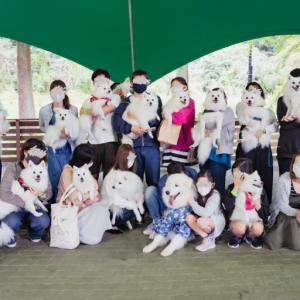日本スピッツのオフ会に参加したい!どうしたら参加できるの?