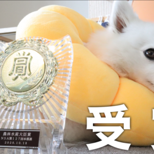 【ご報告】日本スピッツ協会 第127回本部展にて農林水産大臣賞をいただきました。