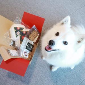 【Doggy Box(ドギーボックス)】犬のおもちゃとおやつが毎月届くお楽しみボックスを試してみたよ。