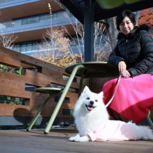 国営昭和記念公園とGREEN SPRINGSを愛犬と散歩