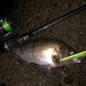 ブリーデン Glamour Rock Fish TE74fortunateNB