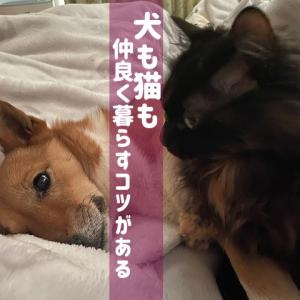 犬と猫一緒に飼うコツと同居のやり方