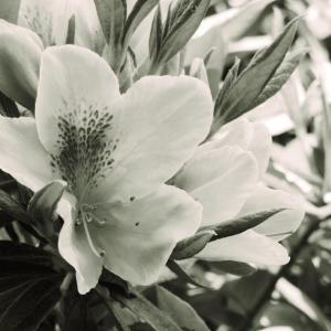 あの花が咲くころ