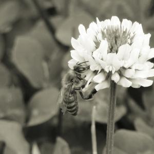 ハチさん動きのテンポがいい