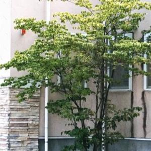 """""""シンボルツリー""""は外構業者に頼んで!植木初心者にはハードル高かった..."""