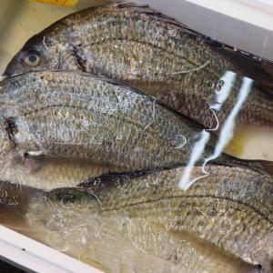 ヘチ釣りの始め方|落とし込み釣り・仕掛け・竿・餌・ライン【初心者必見】