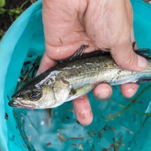 【釣り餌の定番】ゴカイの付け方や仕掛け方のコツ、釣れる魚の種類も紹介!
