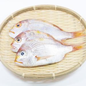【レンコダイ(連子鯛)の基本知識】レシピ・旬な時期・釣り方・下処理を解説!