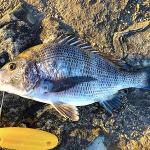 フカセ釣りにおすすめな餌を徹底解説!付け方や作り方なども解説