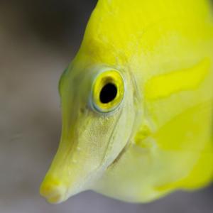 ニザダイ(サンノジ)は臭くてまずい?絶品レシピ・旬な時期・釣り方を解説