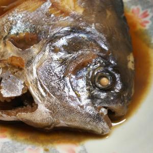 【高級魚マナガツオの基本知識】レシピ・旬な時期・釣り方・捌き方を解説!