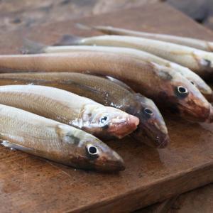 魚へんに喜でなんと読む?鱚(キス)の正しい読み方・由来・別名をご紹介!【魚へんの漢字辞典】