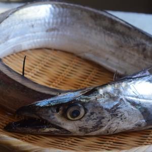 タチウオ釣りにおすすめの餌を紹介!付け方やパワーアップ方法も解説!