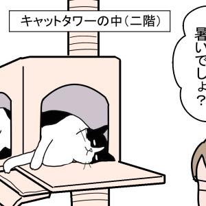 猫にとっての快適な場所とは