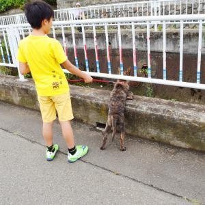 甲斐犬ハルヱ、生まれて初めてのお散歩デビュー♪