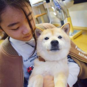 柴犬と甲斐犬と一緒にBBQ!!