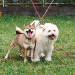 愛犬と突然のさよなら 紫陽花の記憶