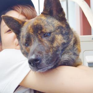 顔は怖いけど心は優しい甲斐犬♪