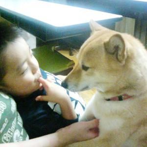 柴犬エミーと息子、若かりし頃♪