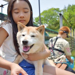 柴犬エミーと甲斐犬ハルヱは風船に興味がないらしい
