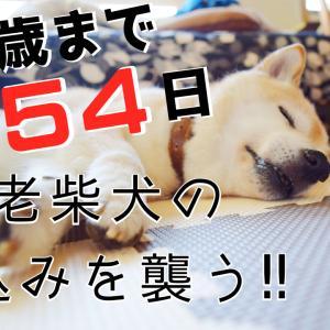 柴犬エミー17歳まであと54日!!新動画アップしました♪
