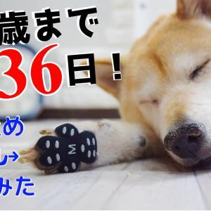 楽天SSラスト5時間限定39%オフアイテムご紹介!!