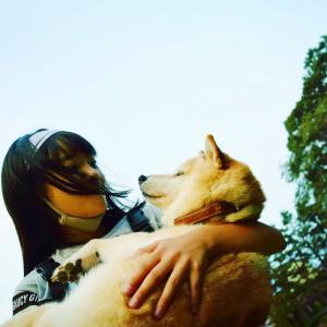 柴犬エミー、ご報告動画をアップしました