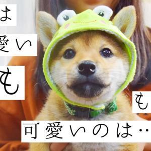 子犬は可愛い…でも子犬より可愛いのは…!!
