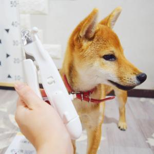 犬用爪切り飼いました♪