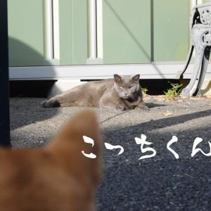 柴犬ビビりまくり!貫禄ありすぎる野良猫に遭遇!
