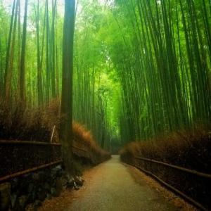 Gaze the beautifulness of Bamboo Forest, Arasiyama-Kyoto