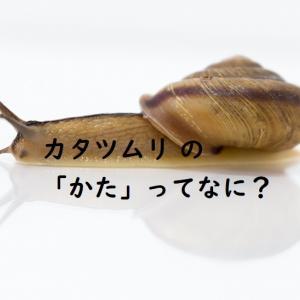 カタツムリ の「かた」って?知っておきたい基本の7つの疑問!