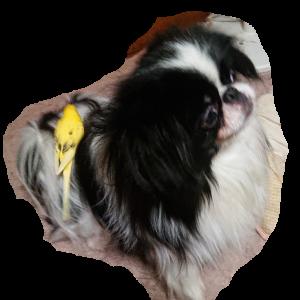 犬が大好きなセキセイインコ