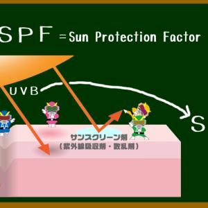 え、日焼け止めの「SPF」値は、UV対策効果の持続時間と関係ない?!