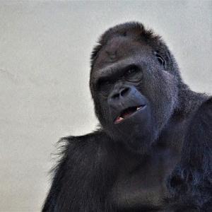 【モラ夫あるある】太ったのはオマエが朝食をつくるから!昨日までほめていたことを今日怒るモラハラ思考