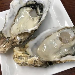 漁師の海鮮丼【宮城・松島】で食べた牡蠣の味が忘れられない。