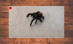 【OpenCV】虫の侵入経路を監視するプログラムを作ってみた