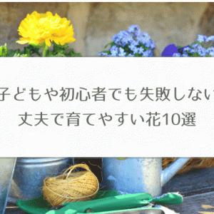 種をまくだけでグングン育つ花 10選【子どもや初心者でも失敗なし】