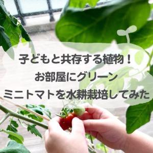子どもと共存する植物!お部屋にグリーン・ミニトマトを水耕栽培してみた