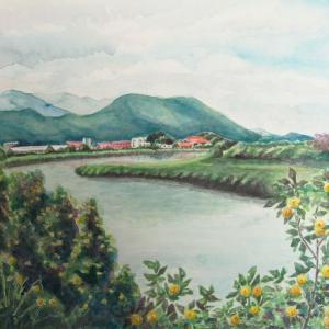 2020.07 ハマボウが生育する泉川の風景(糸島市)